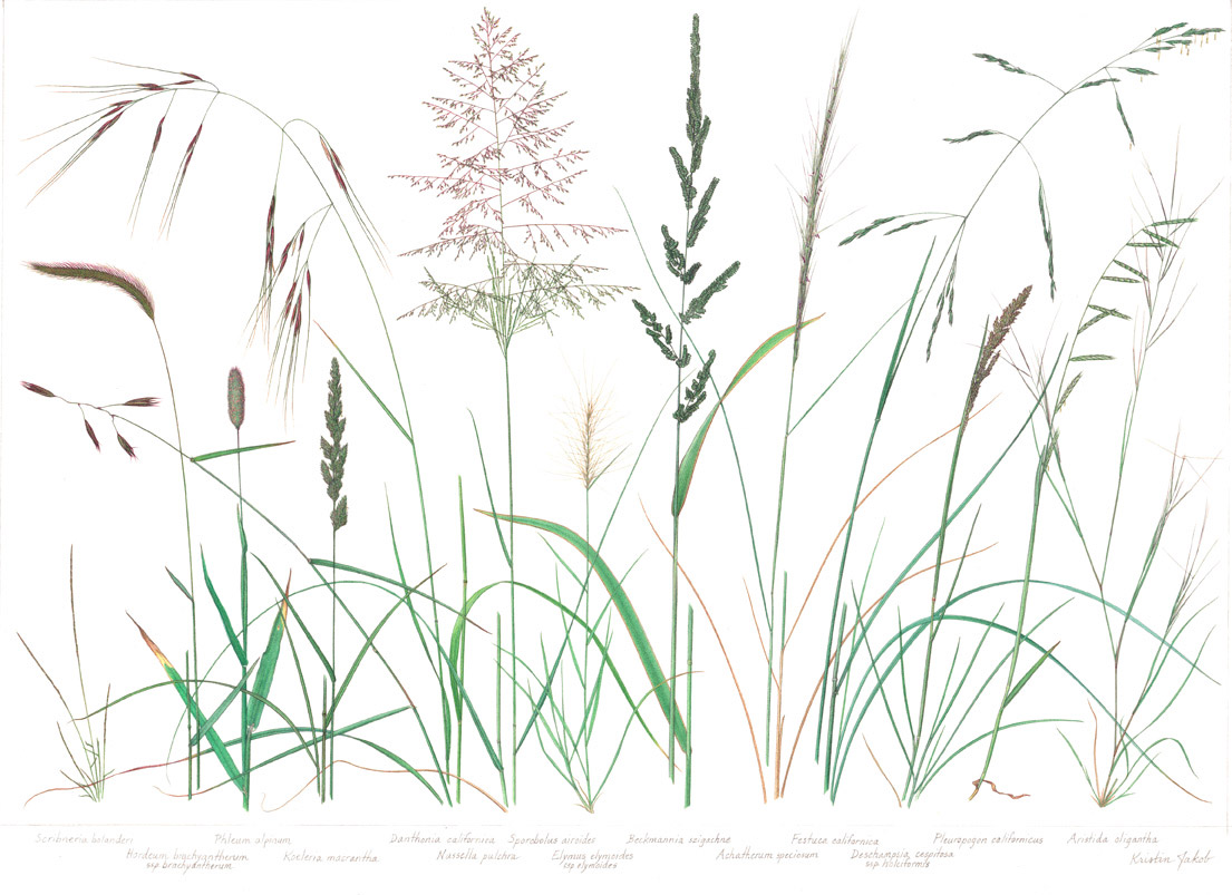 Grass-Poster-Native-1